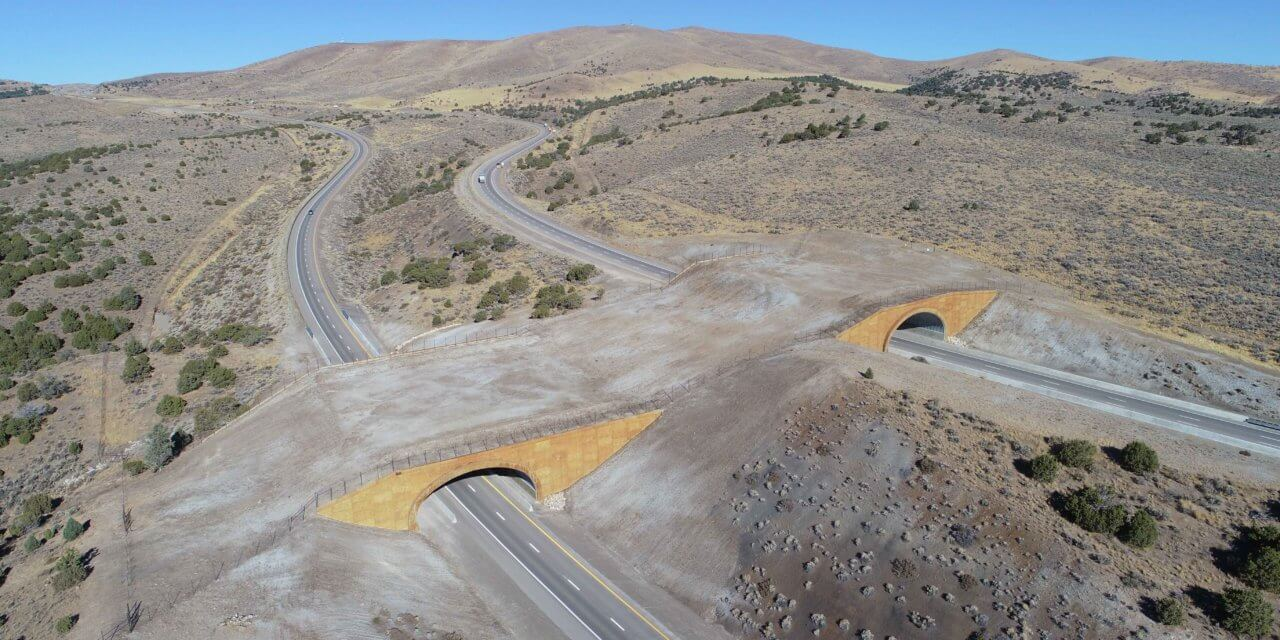 Once Seen as Frivolous, Wildlife Crossing Now Seen as a Way to Save Bucks — and Drivers